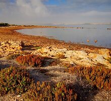 Coorong #5 by Bette Devine