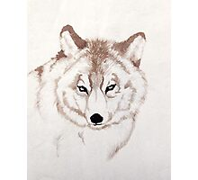Snow Wolf Photographic Print
