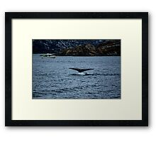 Humpback Dives Framed Print