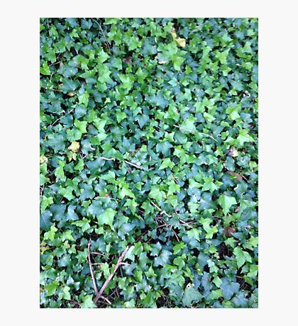Green Leaves 1 Photographic Print
