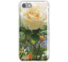 Peach rose. iPhone Case/Skin