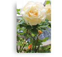 Peach rose. Canvas Print