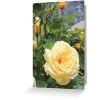 Peach rose. Greeting Card