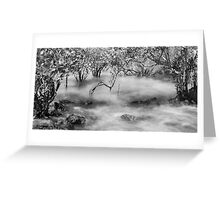 Mangroves at Town Beach, Broome, Western Australia Greeting Card