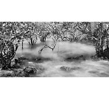 Mangroves at Town Beach, Broome, Western Australia Photographic Print