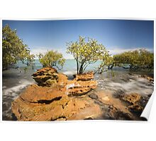 Mangroves at Town Beach Poster