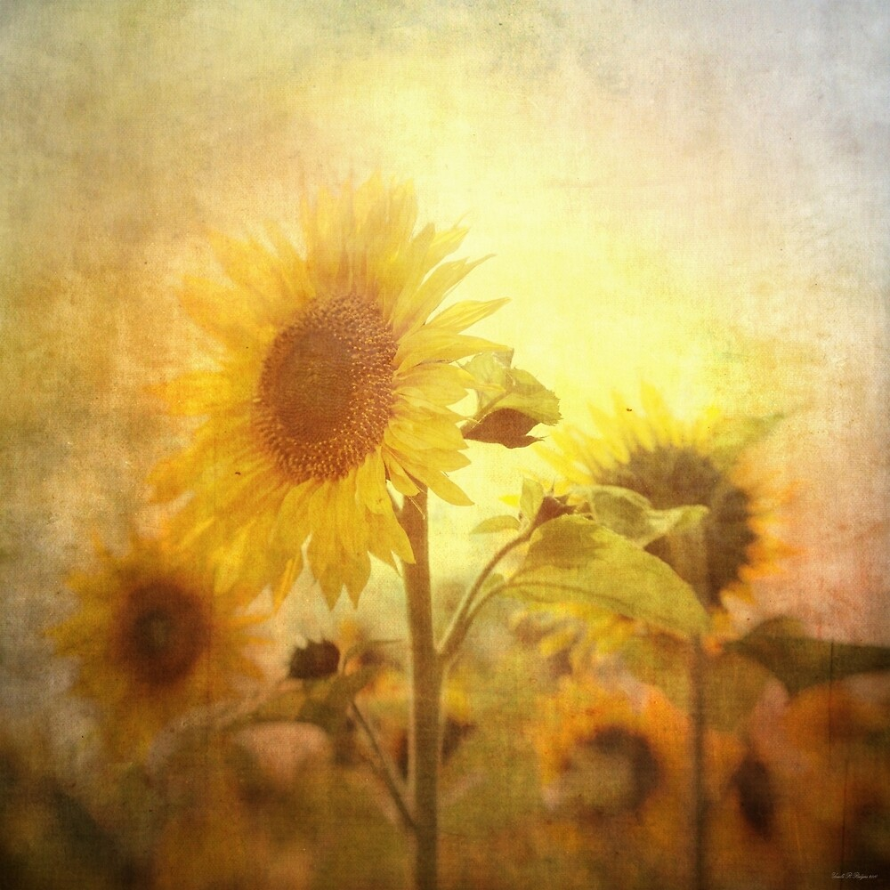 Holding on to the sun by Ursula Rodgers