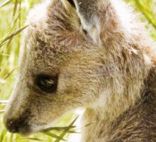 Eastern Grey Kangaroo Joey in Long Grass Sticker