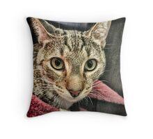 Koneko Cat Throw Pillow