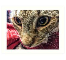 Koneko Cat II Art Print