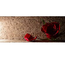 Rose and petal Photographic Print