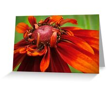 Unfolding Red Flower Greeting Card