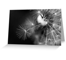 feathers of life Greeting Card