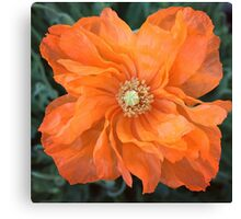Dancing Poppy Canvas Print