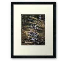 Gator II Framed Print