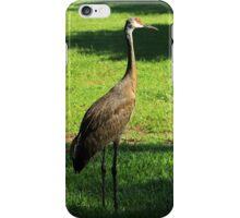 Sandhill Crane iPhone Case/Skin