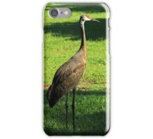 Sandhill Crane iPhone Case/Skin