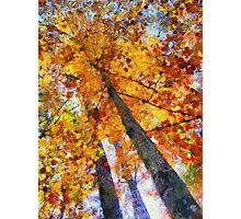 Autumn Trees In The Sky Photographic Print
