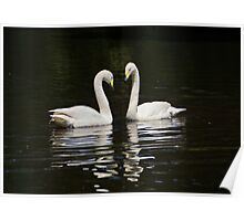 Whooper Swans Poster