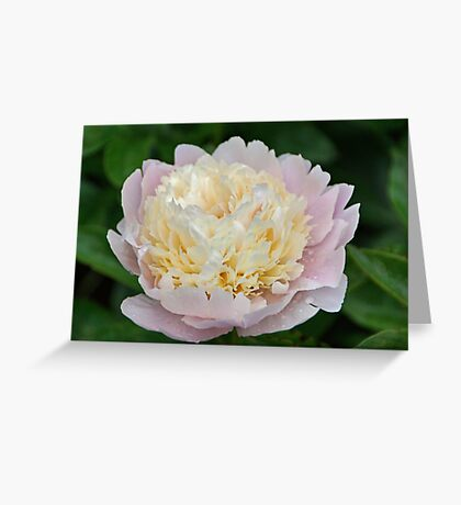 Two-toned Greeting Card