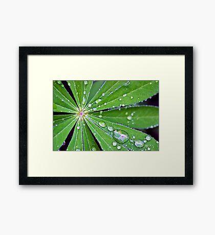 Lupin Leaf Framed Print