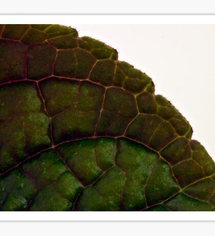 Plecanthrus Leaf Details - Macro  Sticker