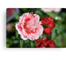 Pink Mini Carnation Canvas Print