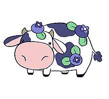 Blueberry Cow Photographic Print