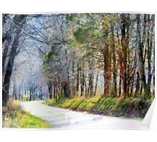 Country Road Through Forest Poster