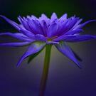 Blue by EbyArts
