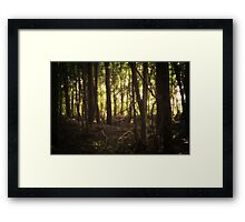 In the Shadows of the Sun Framed Print