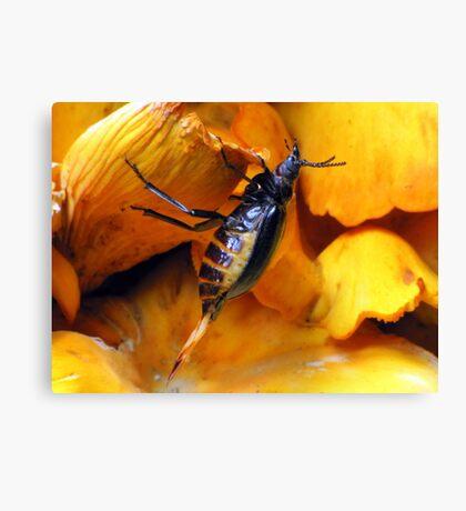 Beetle With Ovipositor Canvas Print