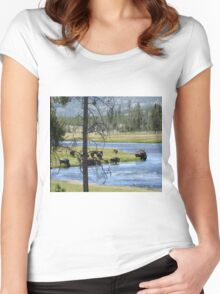 Buffalo on the Yellowstone River Women's Fitted Scoop T-Shirt