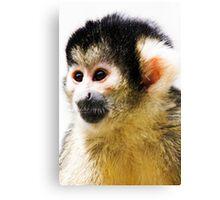 Spider Monkey Canvas Print