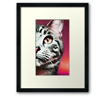 Modern Cat Art - Zebra Framed Print