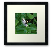 Minty Bee Framed Print