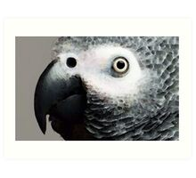 African Gray Parrot Art - Softy Art Print