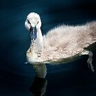 Baby Swan by damhotpepper
