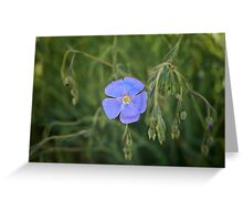 Red Rock Canyon Wildflower Greeting Card