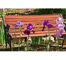 Bench and Iris  Photographic Print
