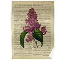 Botanical print, on old book page - flowers- Lilac Poster