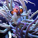 Clown Fish Anemone by elledeegee