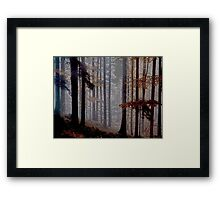 Colorado Trees Series Framed Print