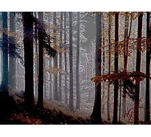 Colorado Trees Series Photographic Print