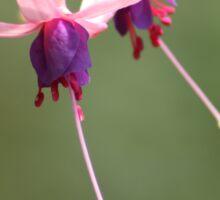purple and pink fuschia Sticker