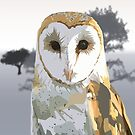 Barn Owl by Adamzworld