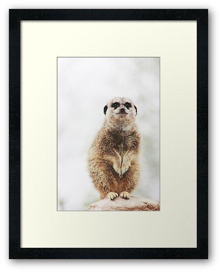 meerkat by wendywoo1972