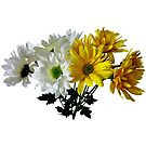 Bouquet of Yellow and White Daisies by Susan Savad