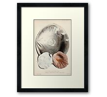Proceedings of the Zoological Society of London 1848 - 1860 V5 Mollusca 001 Framed Print
