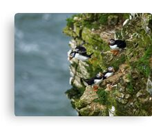 Puffin flight Canvas Print